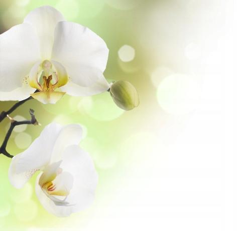 Fototapeta flizelina na wymiar Piękna Orchidea