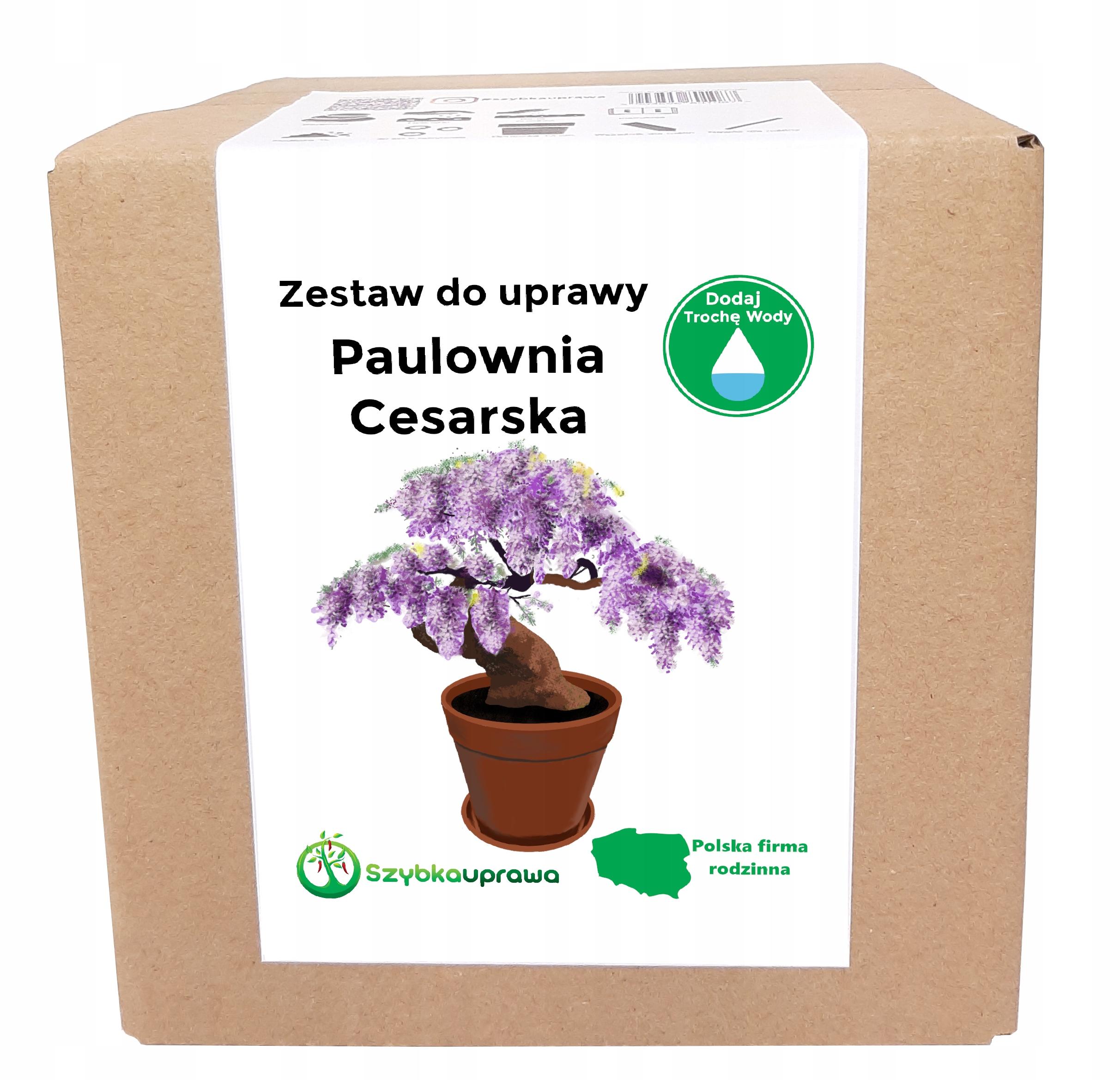 Набор для выращивания BONSAI paulownia imperial X