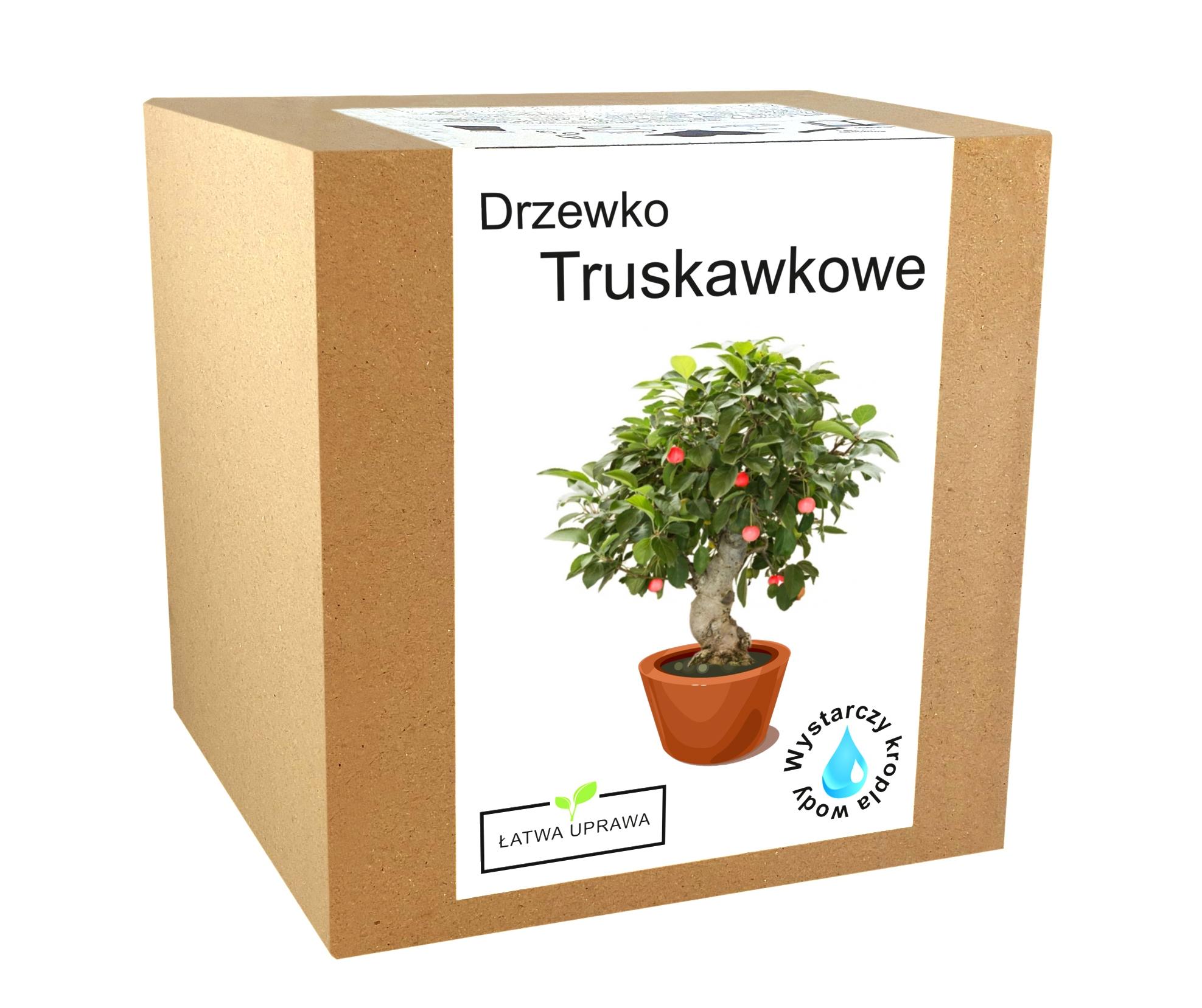 Zestaw do uprawy Bonsai Drzewko Truskawkowe owoce