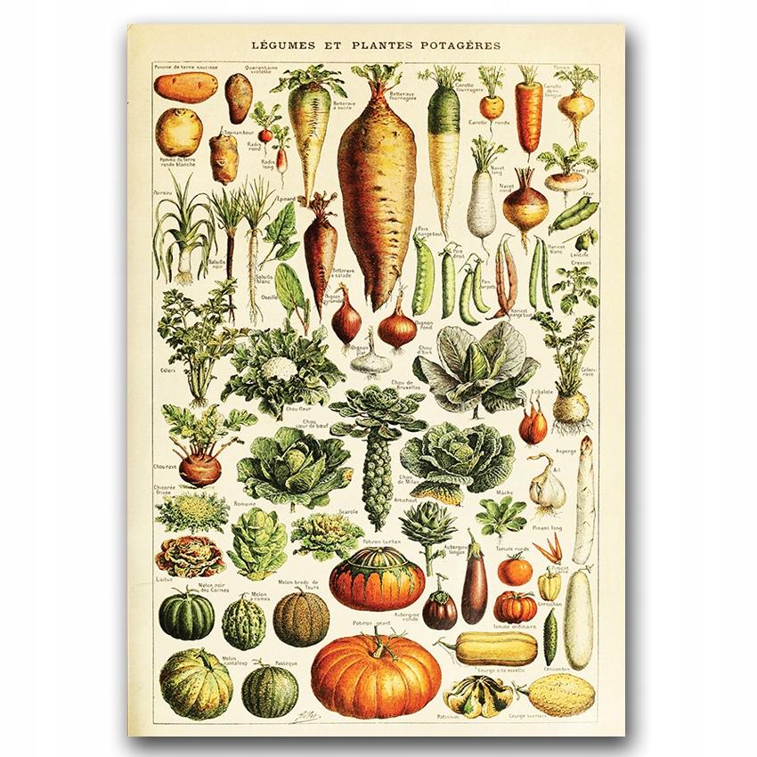 Nástenný plagát v retro štýle Zelenina A3