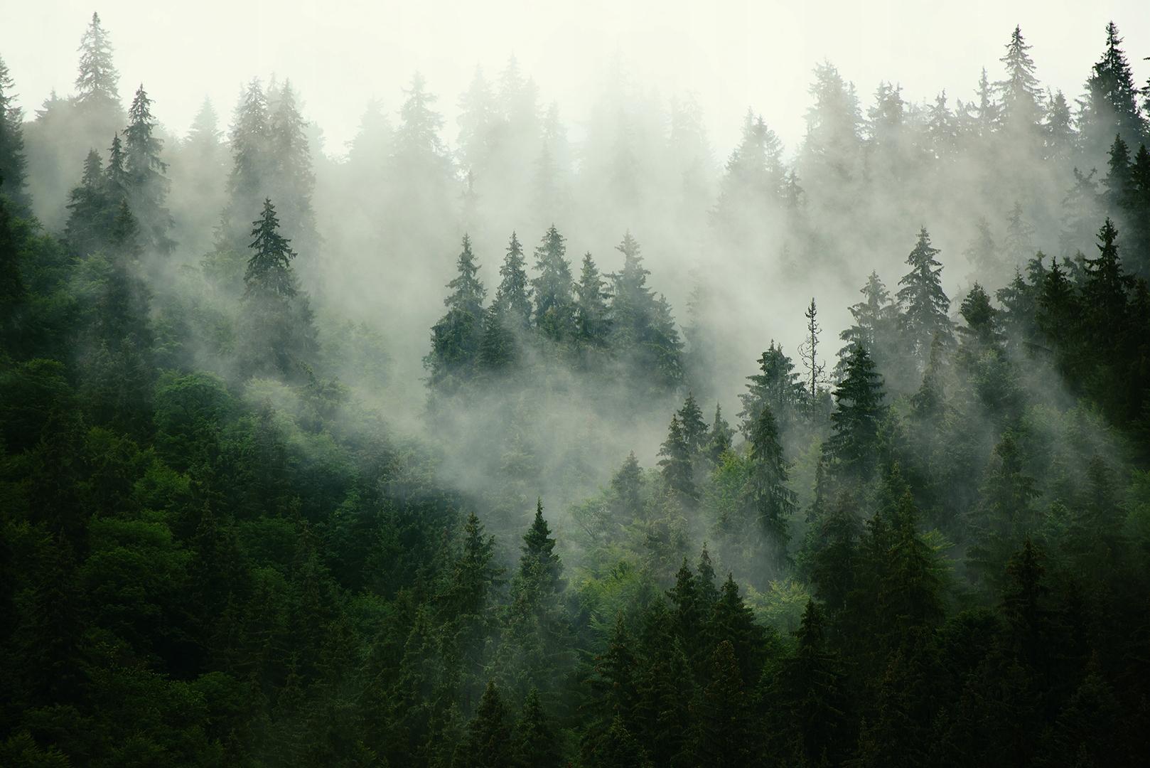 Fototapeta LAS WE MGLE drzewa mgła góry 294x260