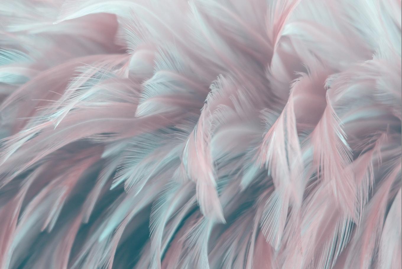 Современные обои 3D розовые перья 368x248