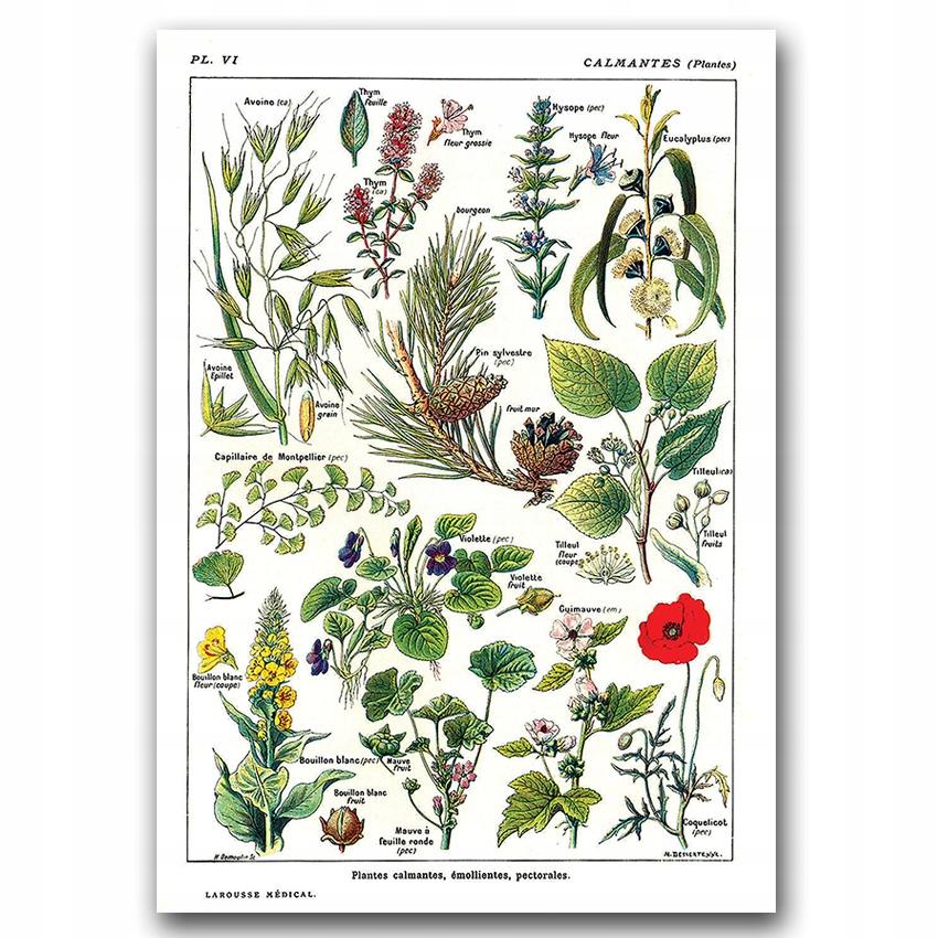 Retro plagát do obývacej izby Botanika 1912 A2