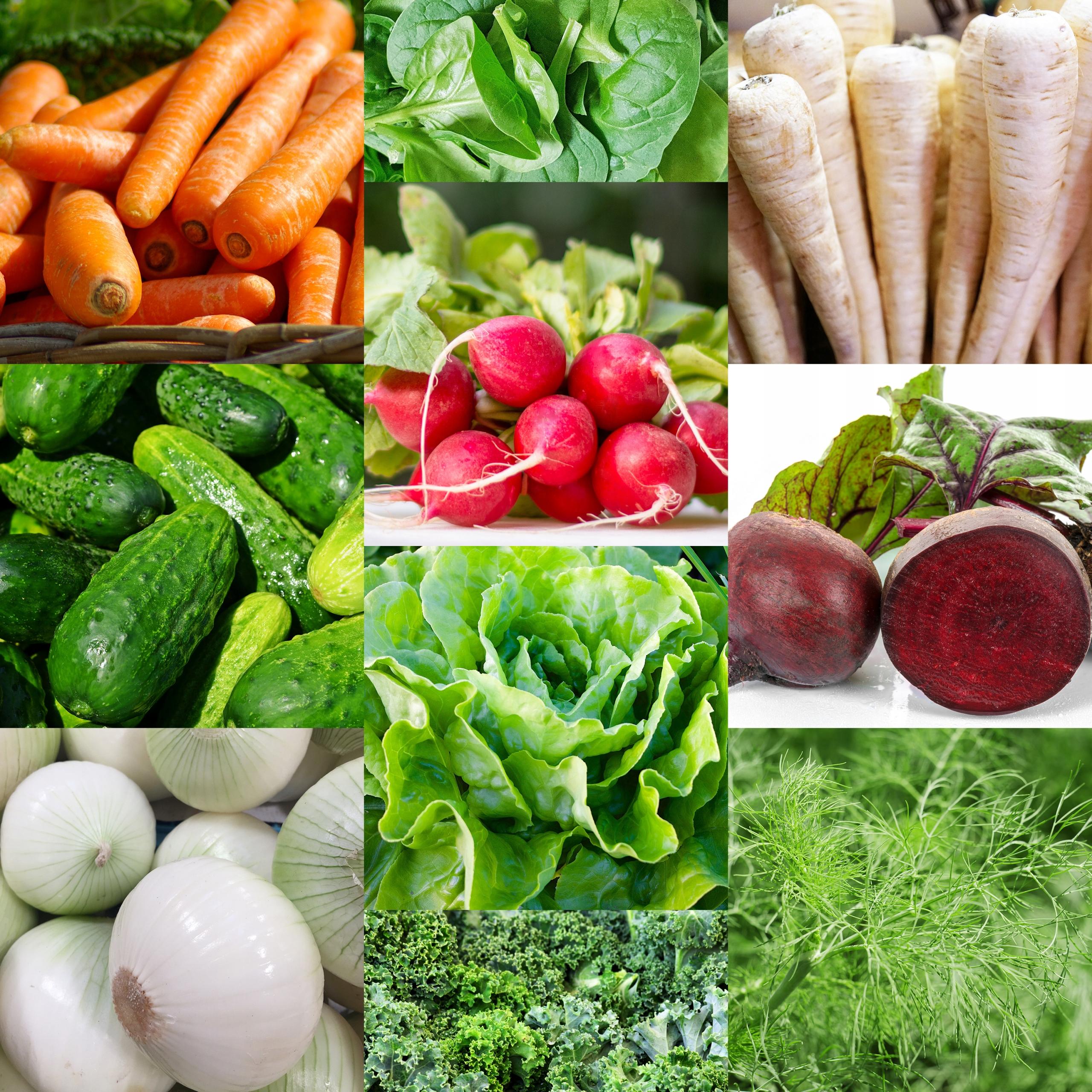 SEED KIT Vegetables For Start - 20 пачек