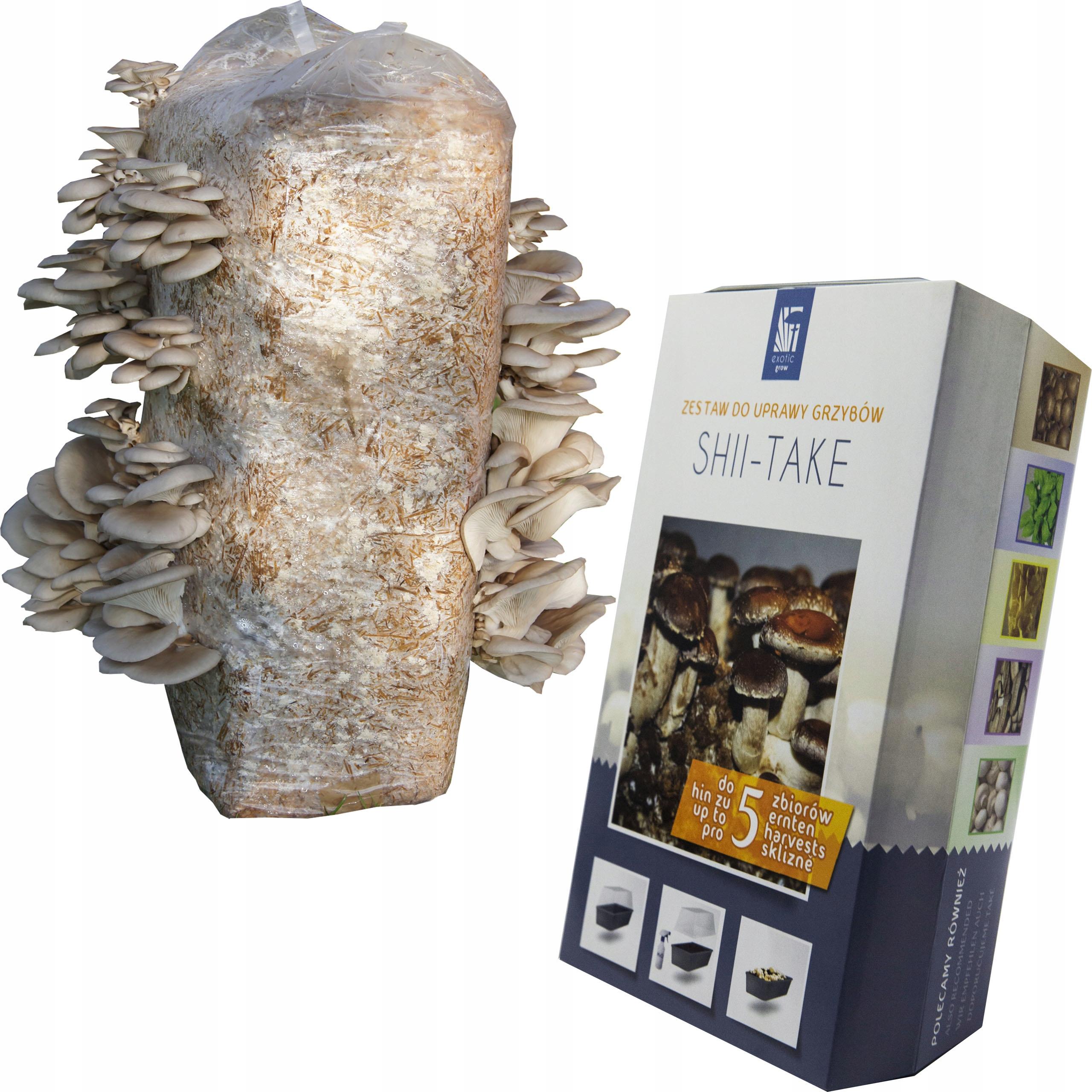 SHIITAKE + BOCZNIAK grzybnia grzyby shii-take