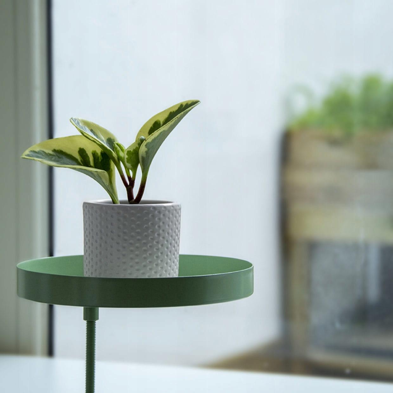 Подоконник подставка для растений с зажимом размер M зеленый
