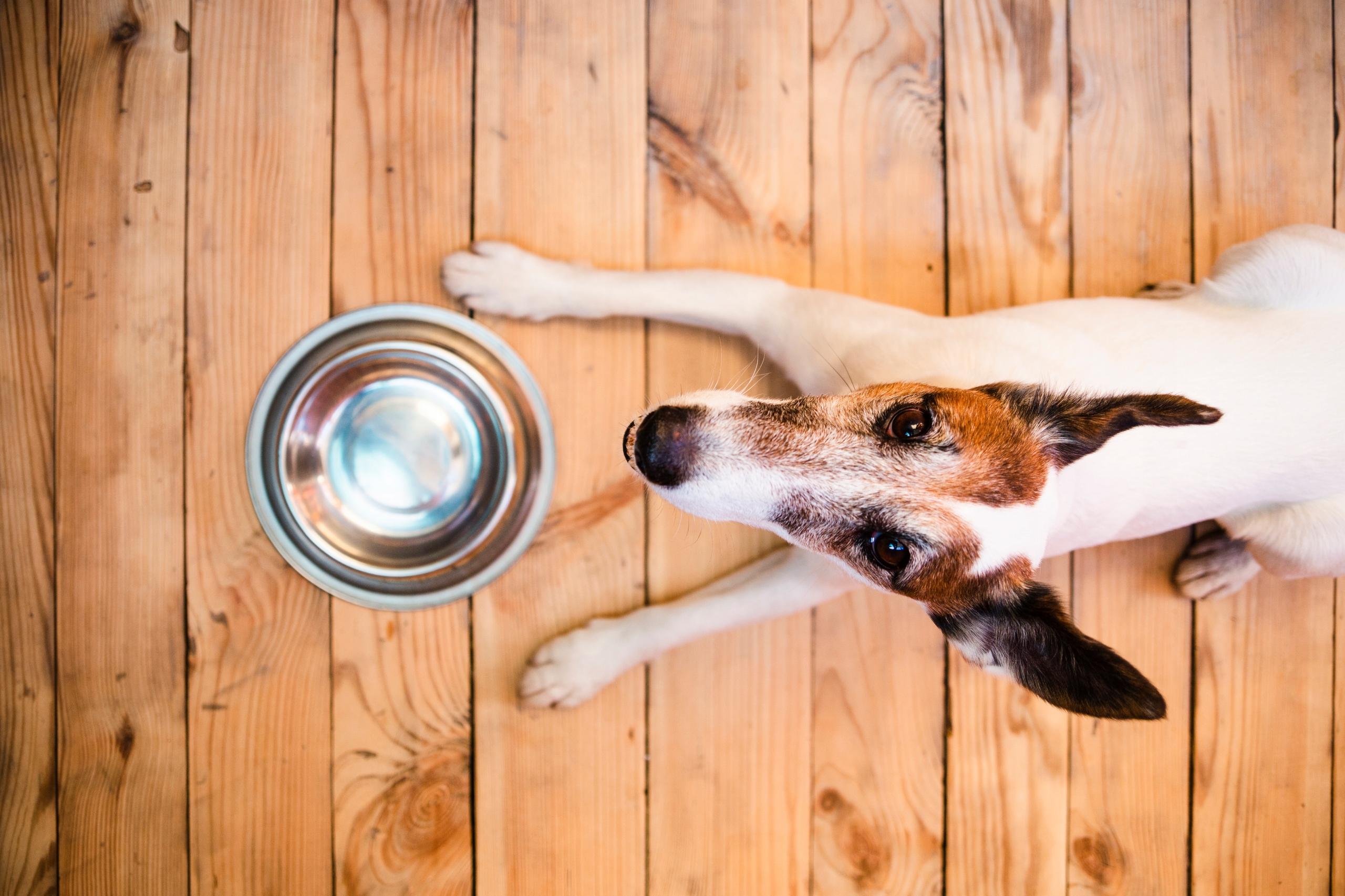 MISKA METALOWA dla psa NA GUMIE ANTYPOŚLIZG 0,6L Rodzaj pojedyncza miska