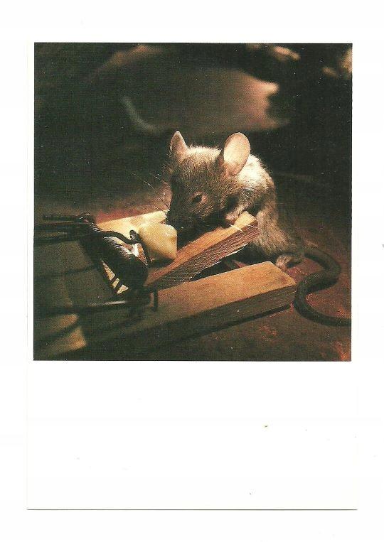 Poczt.- Łapka na myszy, smakołyk i mała ryzykantka