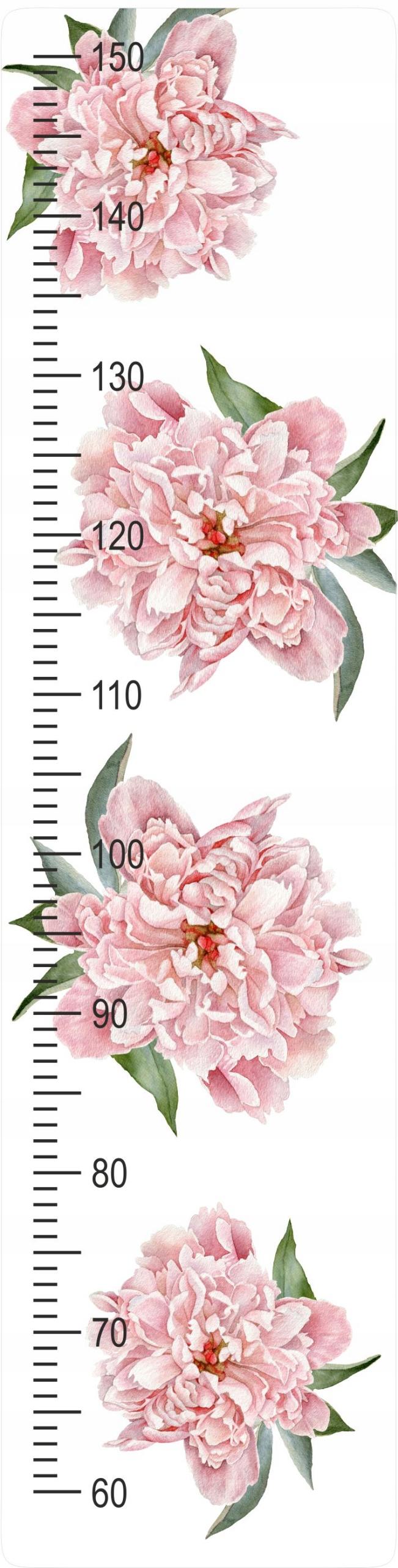 Мера роста Пионы Цветы Девичья комната