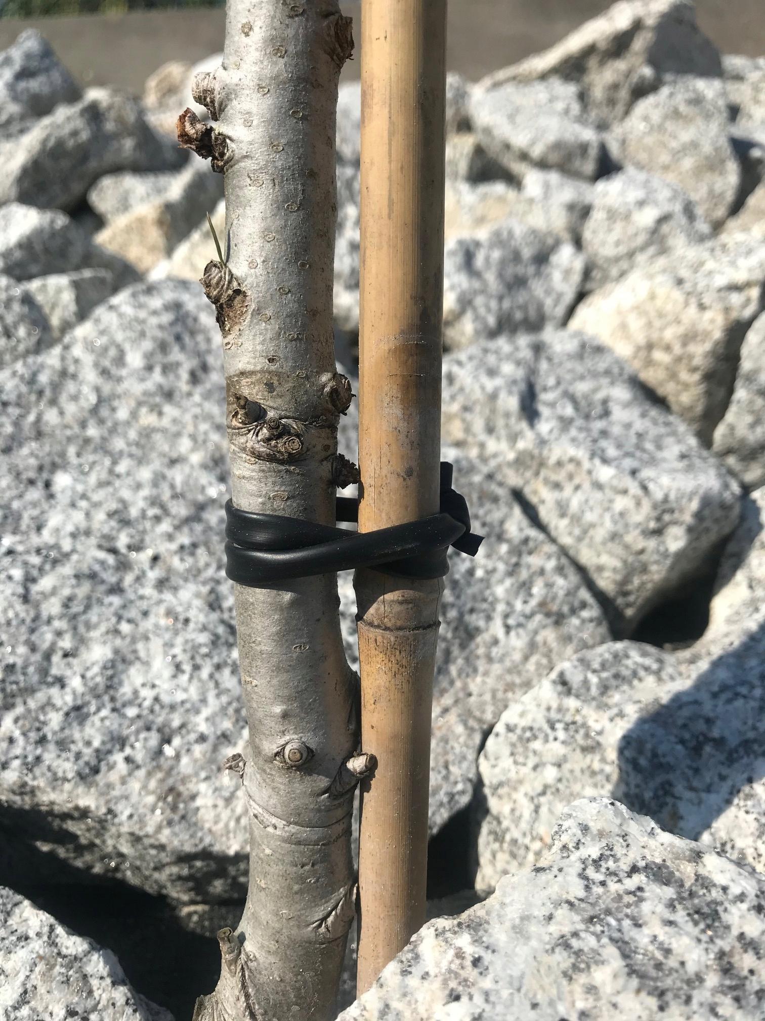 шланг для обвязки деревьев и кустарников! 50 м