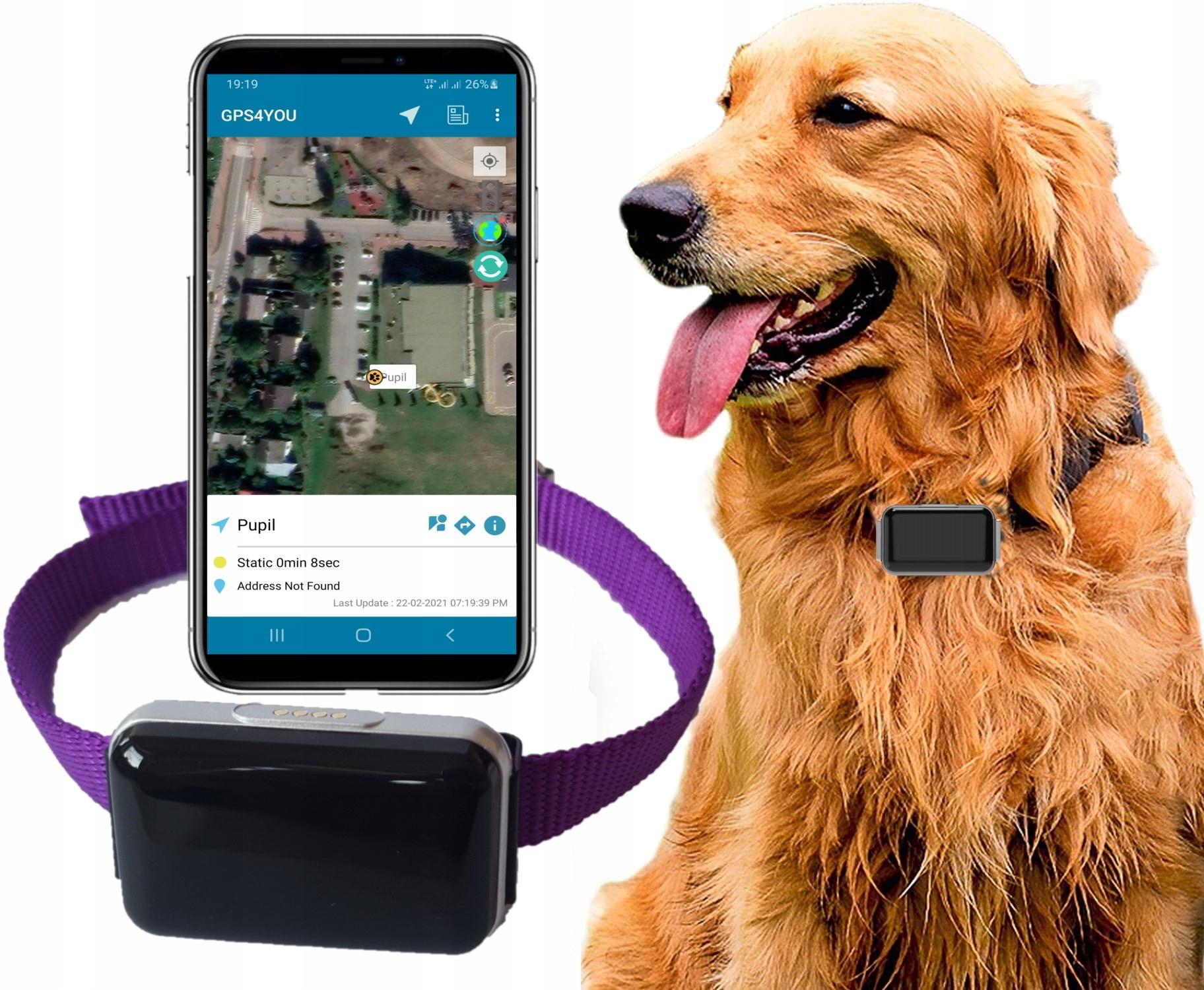 GPS-локатор для Dog Cat + SIM-карта + PL СЕРВЕР