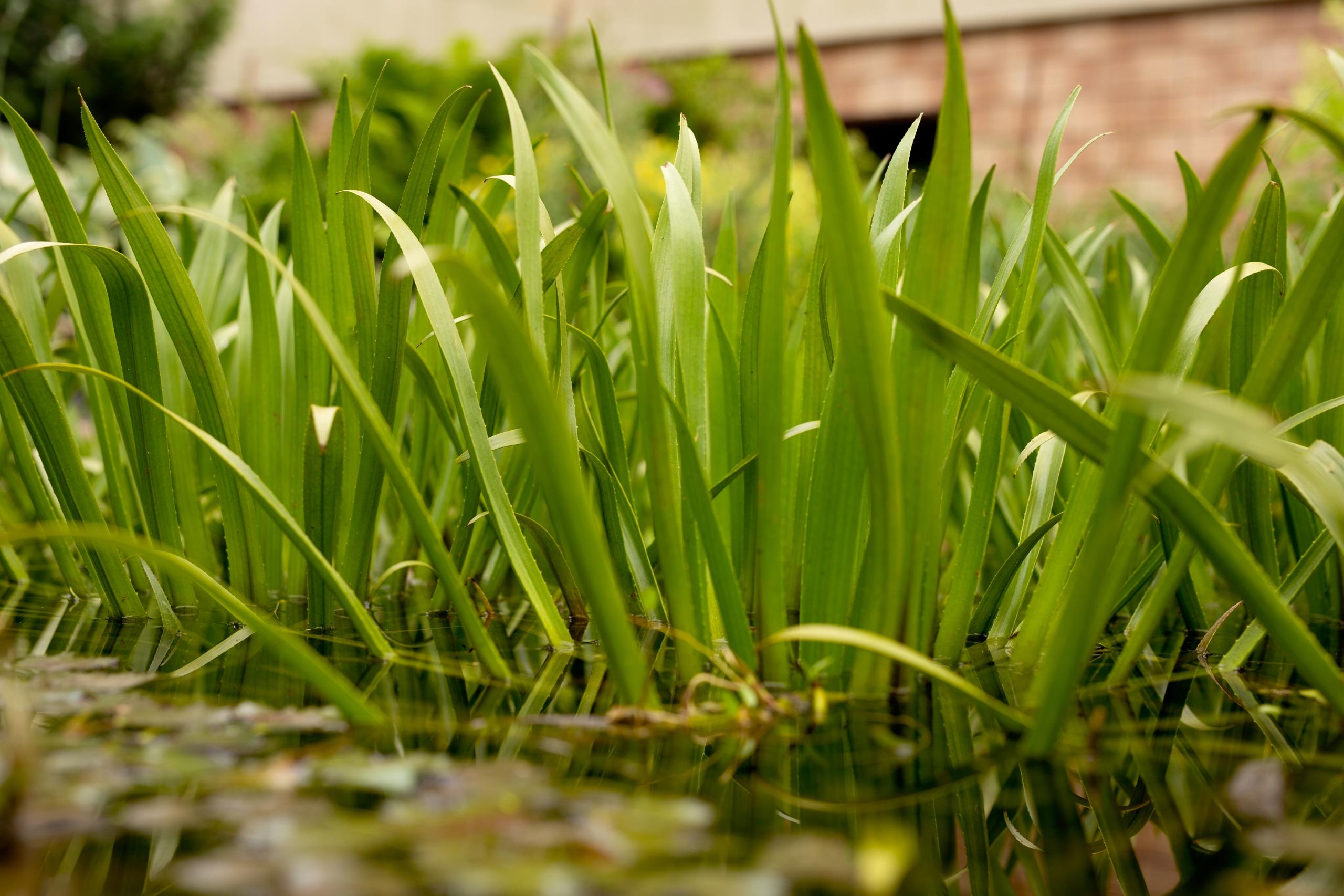 Очищающее алоэ вера для пруда