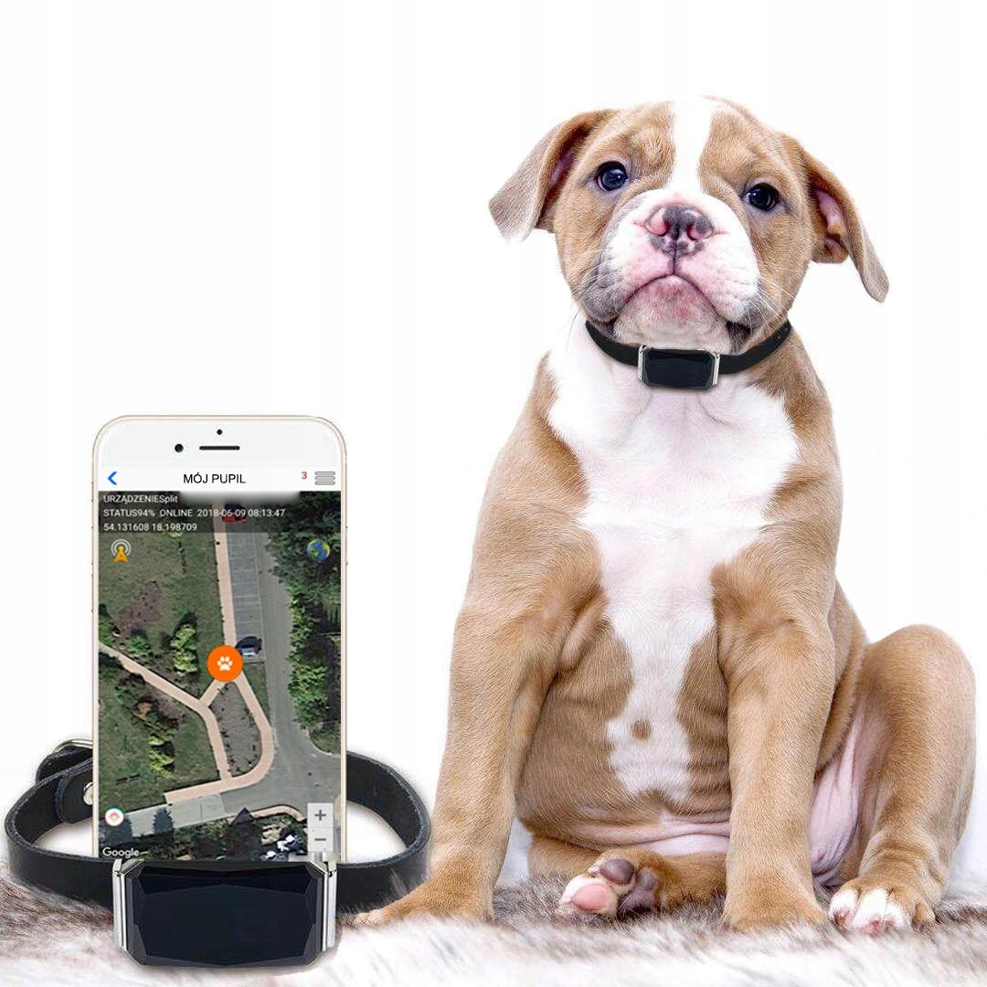 ПРИЛОЖЕНИЕ GPS LOCATOR DOG CAT COLLAR SERVER POLAND
