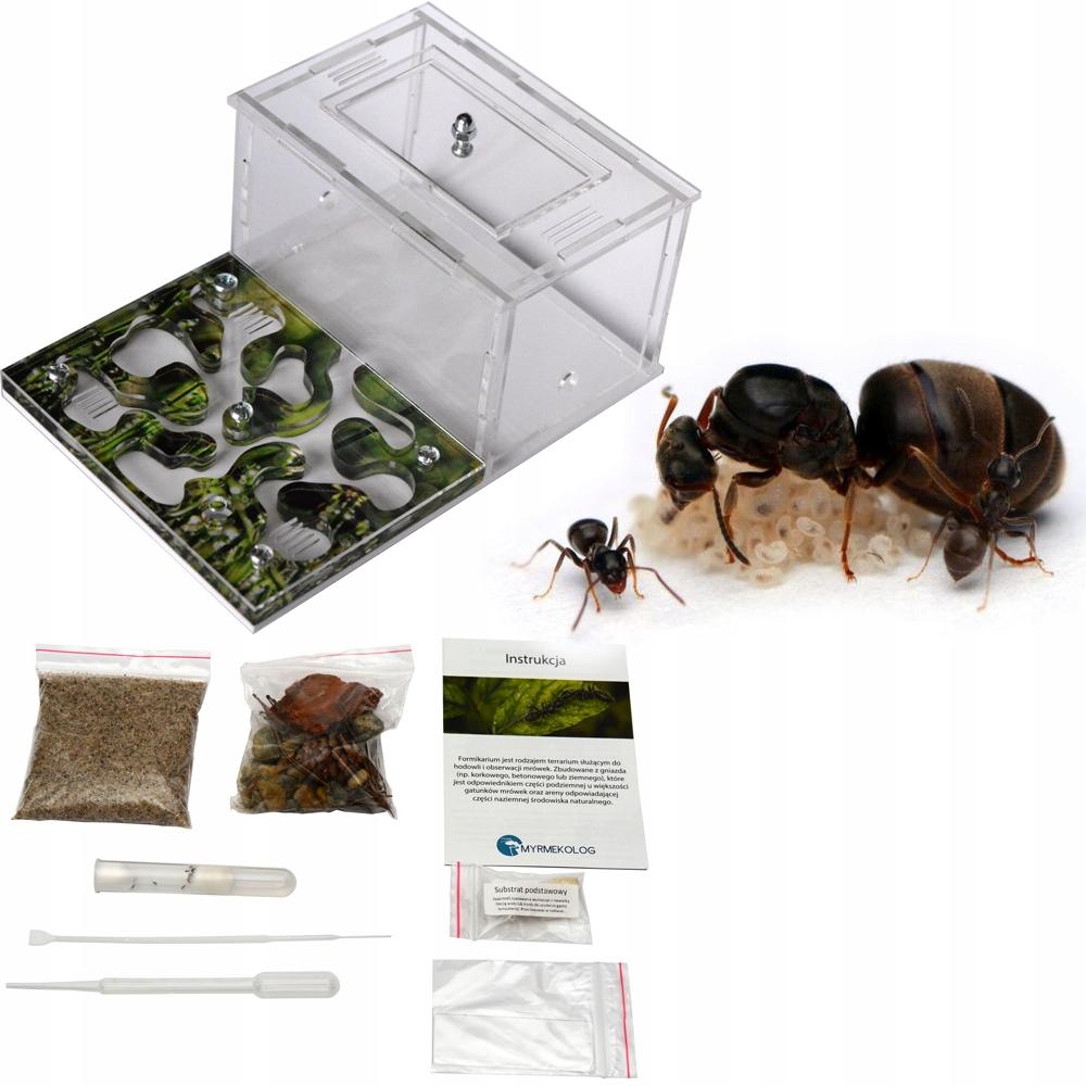 Zestaw startowy Formikarium Novus + mrówki