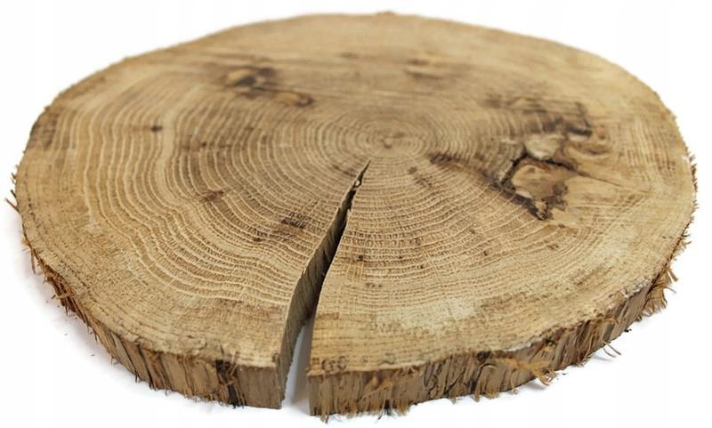 Duży Plaster drewna plastry patera dąb deska
