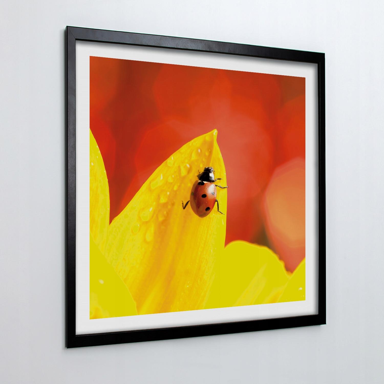Foto-obraz z ramką na ścianę Kwiat biedronka 50x50