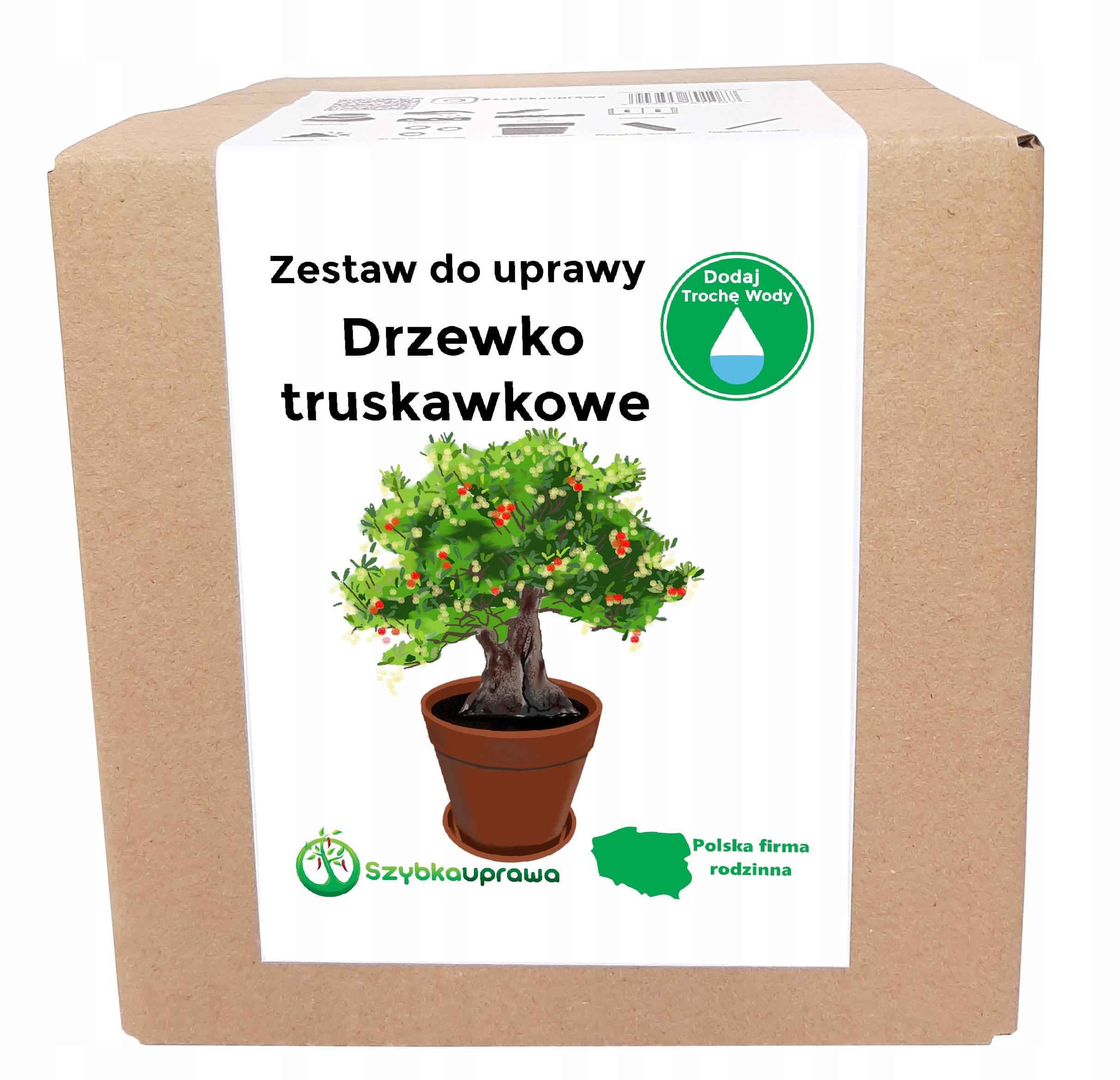 Набор для выращивания Strawberry Tree BONSAI X