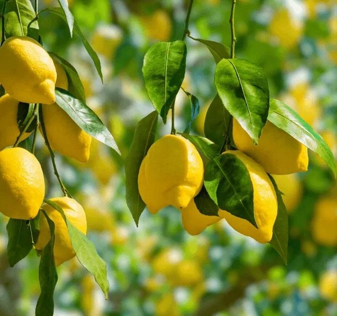 Enzymatyczne wkładki do pisuaru Zapachowe Świeżość Marka Aroma Professional