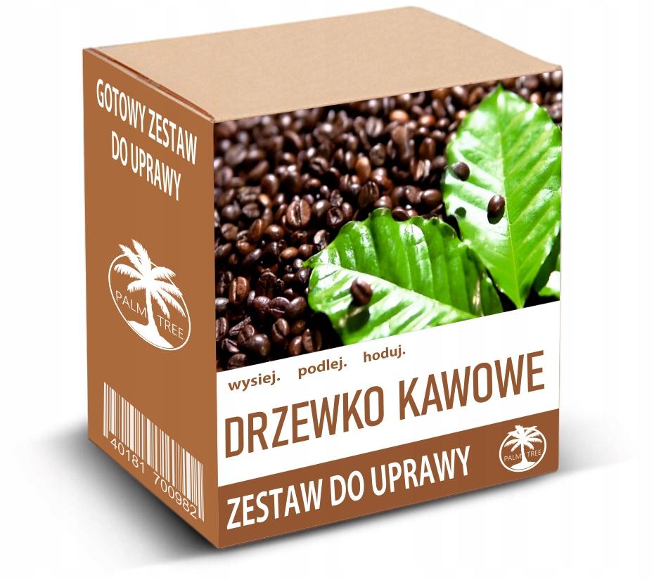 Набор для выращивания кофе арабика КОФЕ ДЕРЕВО