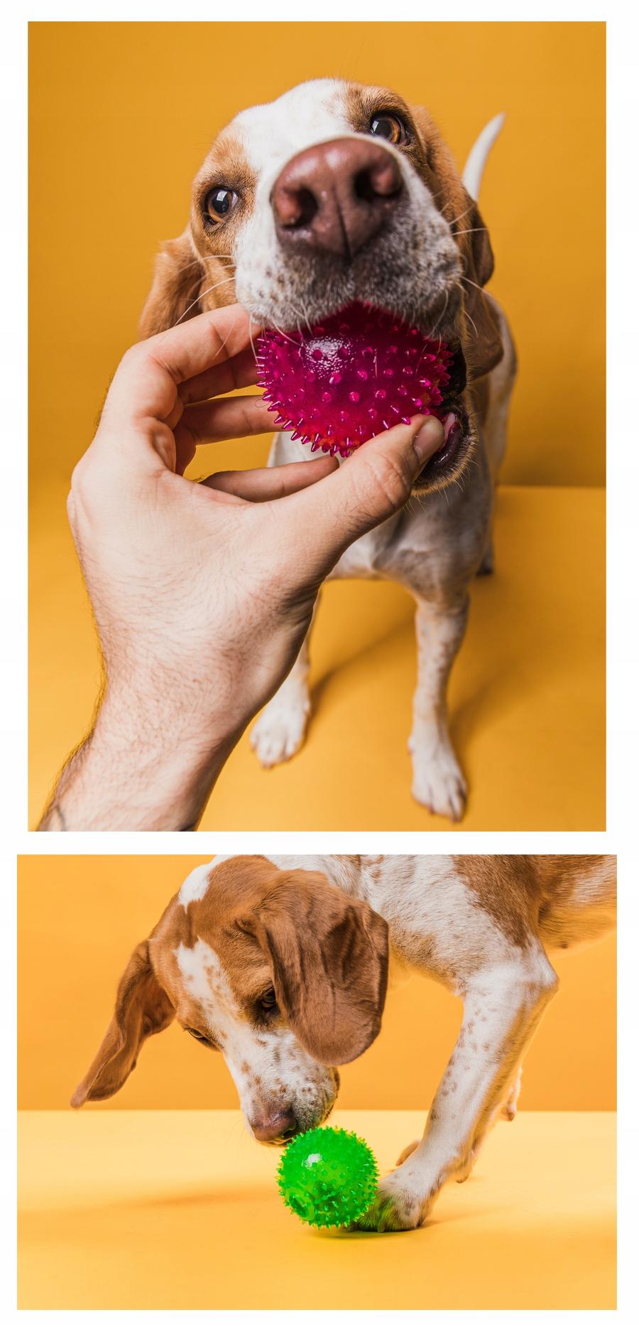 PIŁKA ZABAWKA Z KOLCAMI dla psa ŚWIECI PISZCZY 7CM Waga produktu z opakowaniem jednostkowym 0.1 kg
