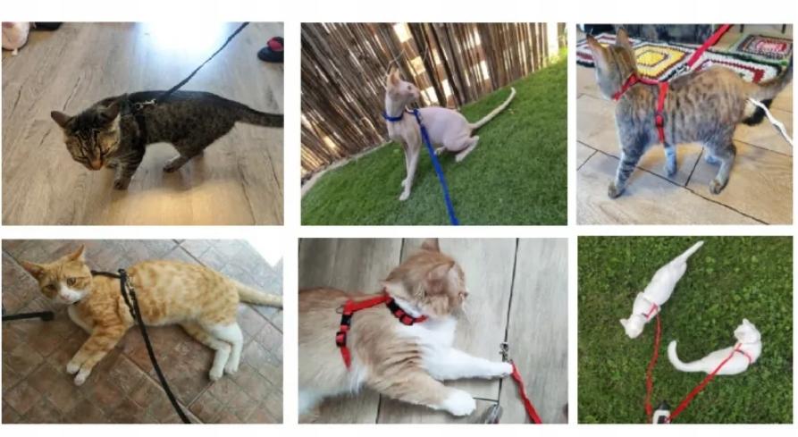 LEKKIE SZELKI Regulowane + SMYCZ dla Psa Kota Maksymalna długość smyczy 120 cm