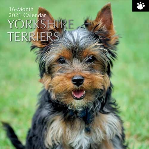 Kalendarz 2021 Yorki Yorkshire Terriers Pieski 14 Zl Allegro Pl Raty 0 Darmowa Dostawa Ze Smart Wroclaw Stan Nowy Id Oferty 9854665885
