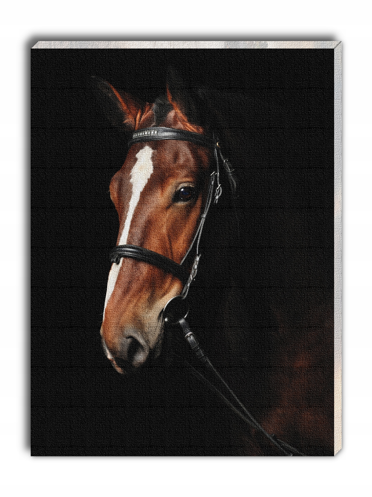 Obraz na płótnie piękny gniady koń na czarnym tle