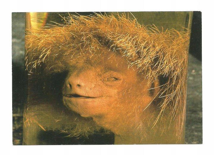 Открытка - Голова ленивца / анатомический образец
