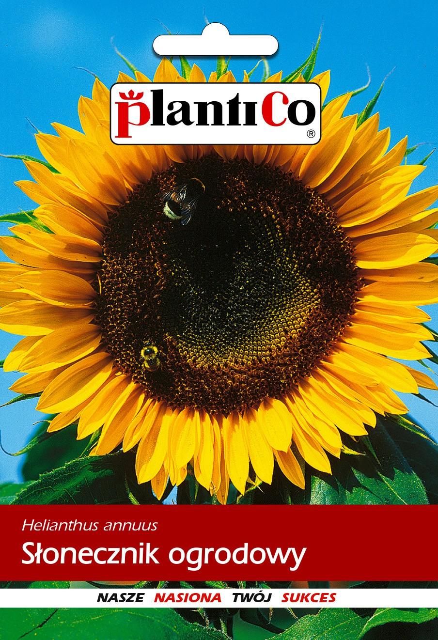 Słonecznik ogrodowy 10G PlantiCo