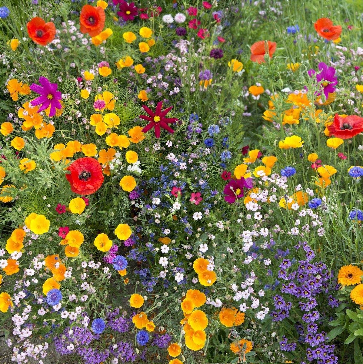 ANTICOMAR MIXTURE смесь трав и цветов.