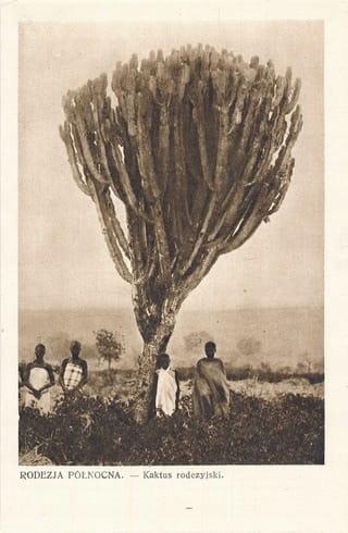 Severná Rhodesia 0693