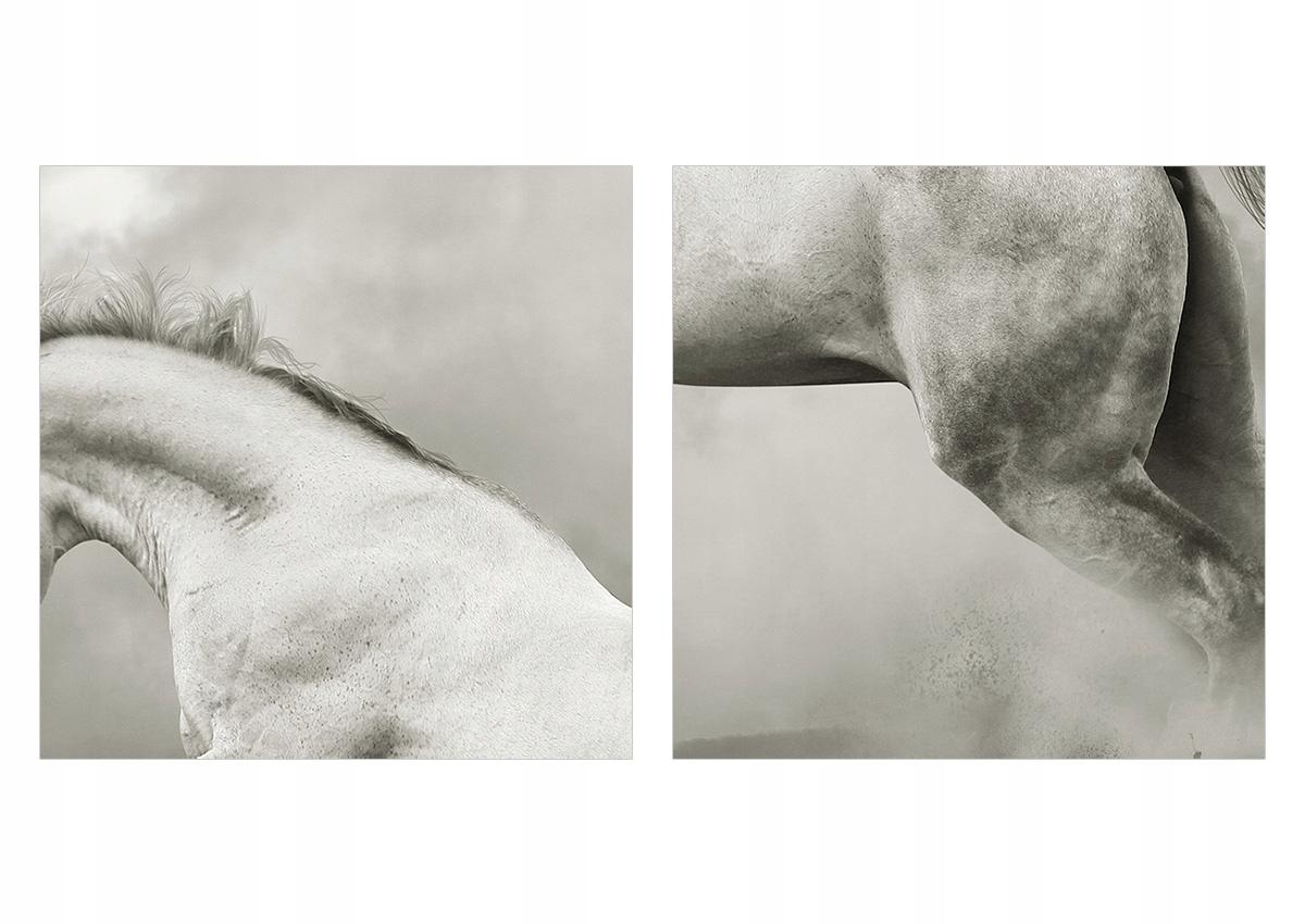 Obrázok na skle, koni, zvierati GEA125x70-3542. Výška produktu je 70 cm