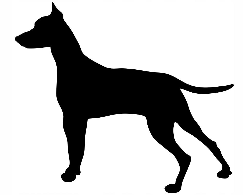 автомобильная наклейка пинчер собака выбрать размер