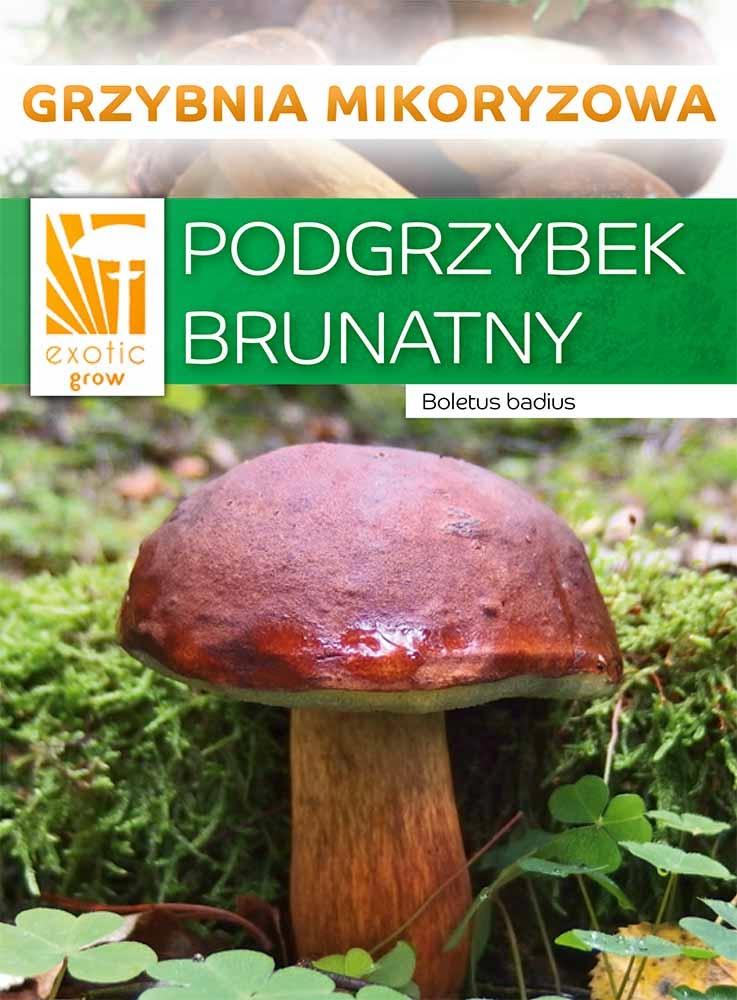 Подберезовик лесные грибы, микориза