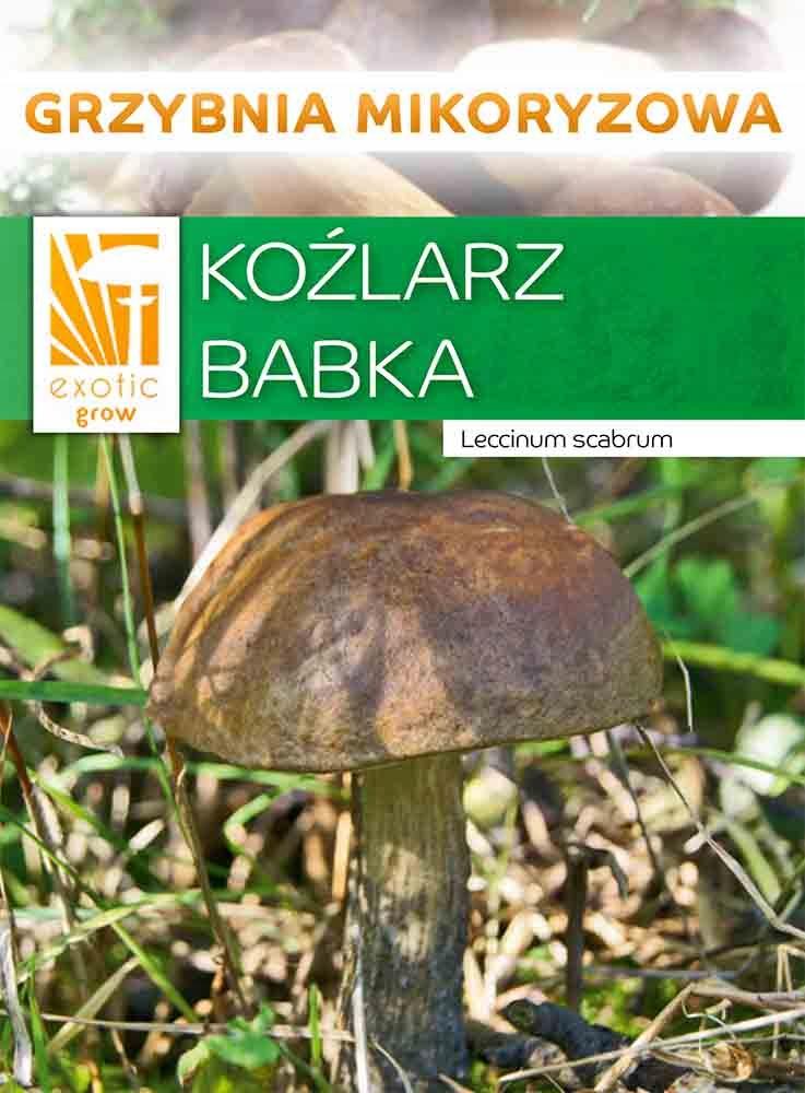 Koźlarz BABKA лесные грибы, микориза
