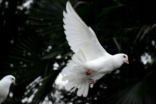 Karma dla Gołębi ZIMOWA Best-Natural 25KG Forma ziarno