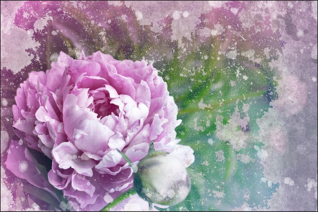 Nástenné maľby Pivónia Vintage 240x360 /143801263