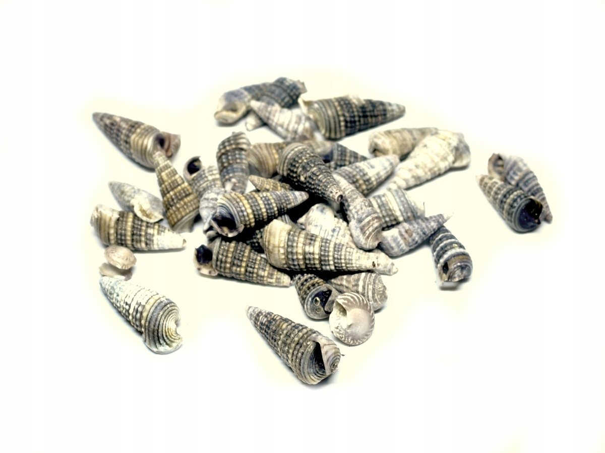 Muszelki małe muszle morskie naturalne K20 50g