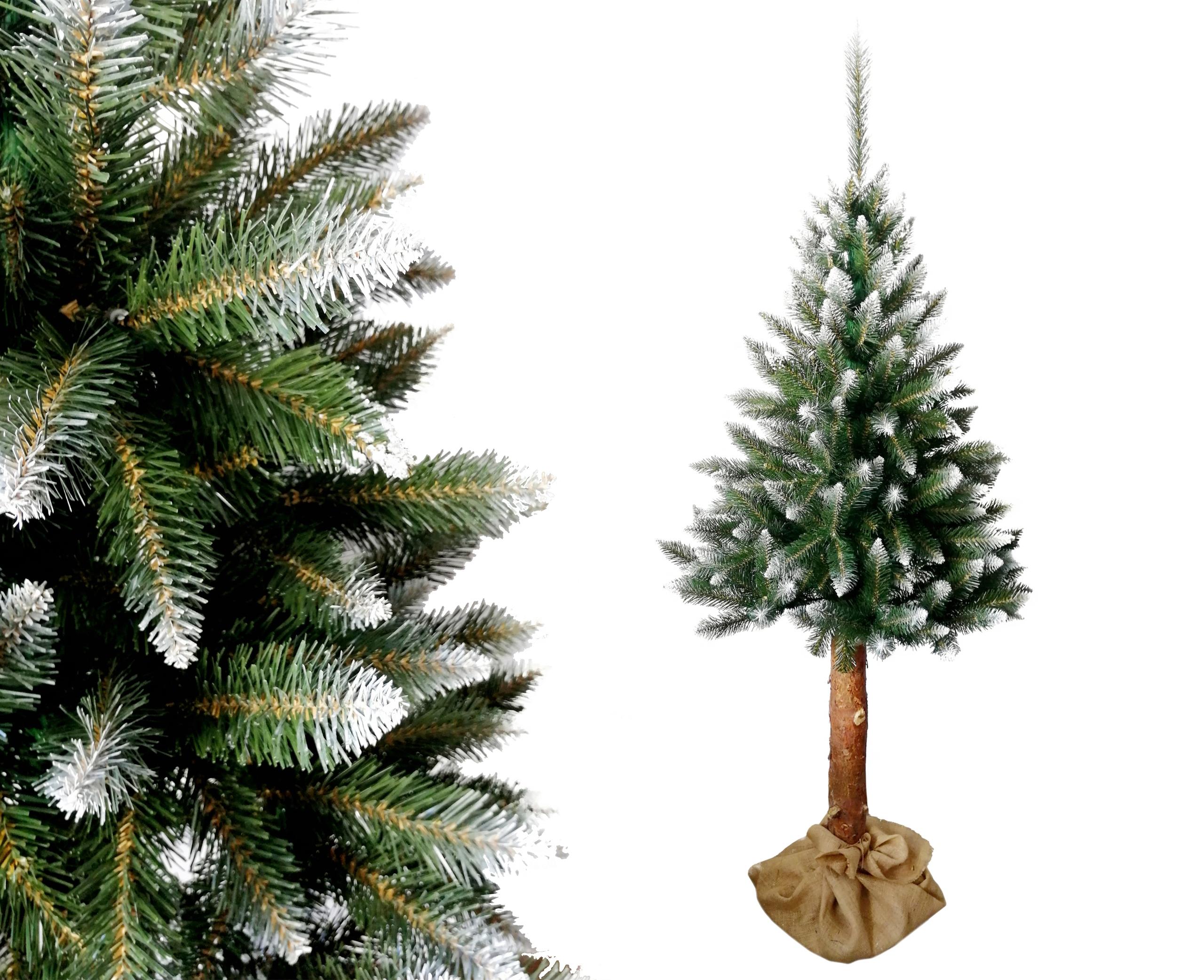 Vianočný stromček HORSKÝ SMREK 180 cm na kmeni borovice
