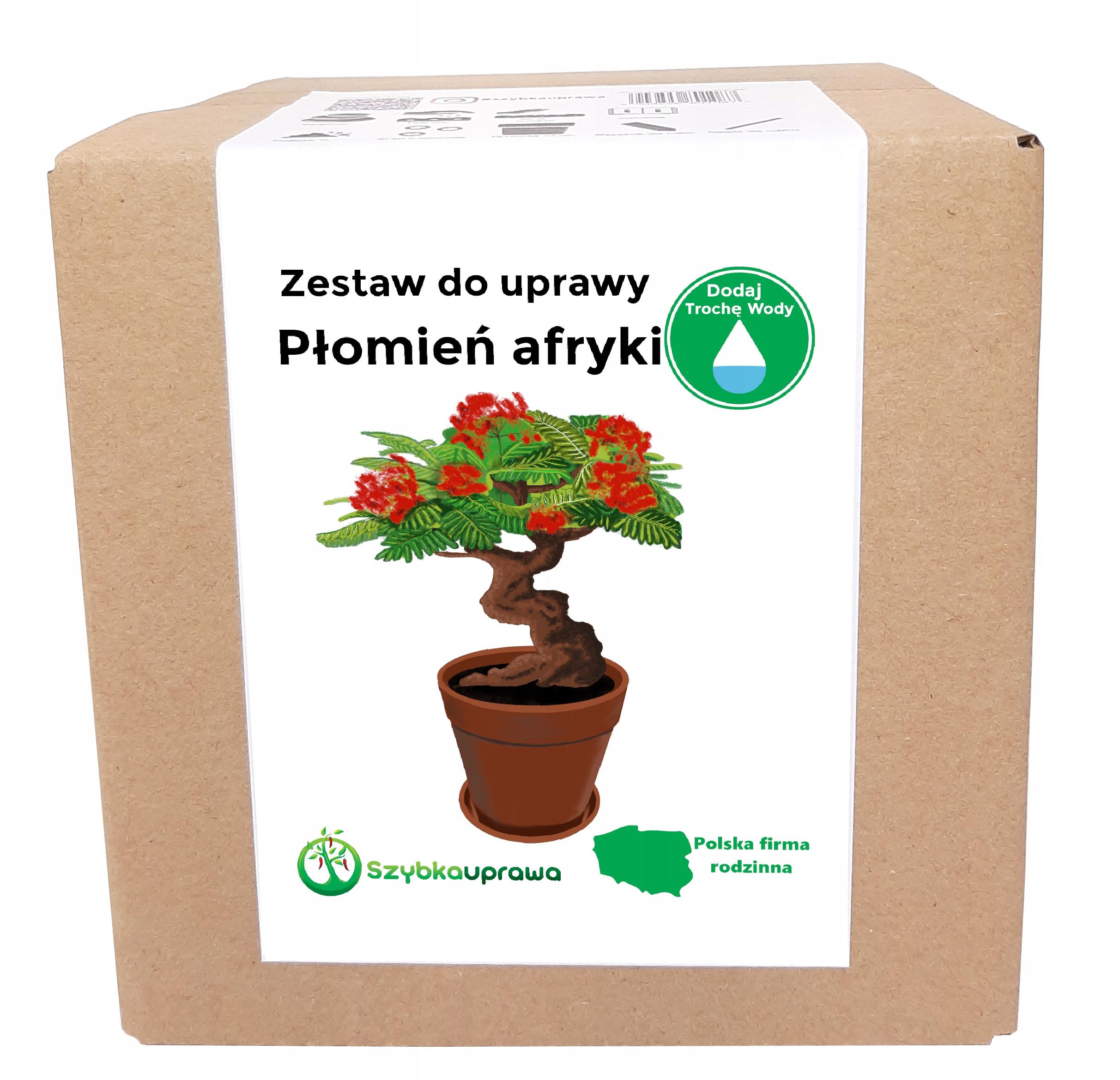 Набор для выращивания Africa Flame BONSAI X