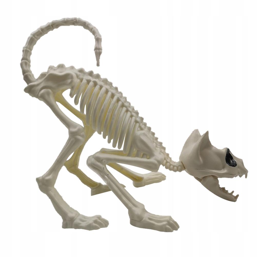 1 Pc przyczajony kot szkielet model czaszki kota