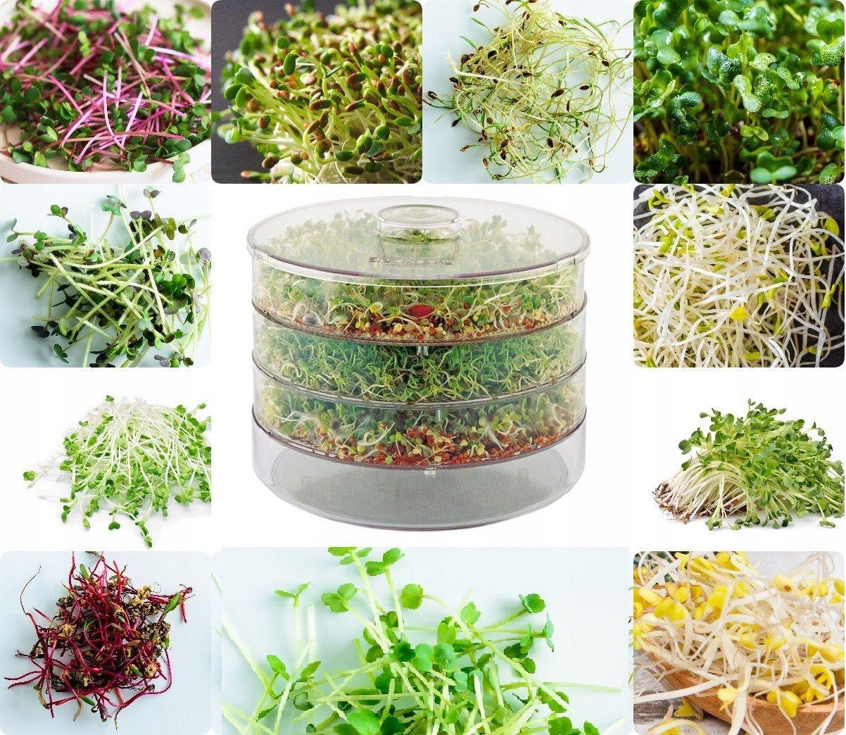 Ящик для ростков x10 семян для проростков без ГМО