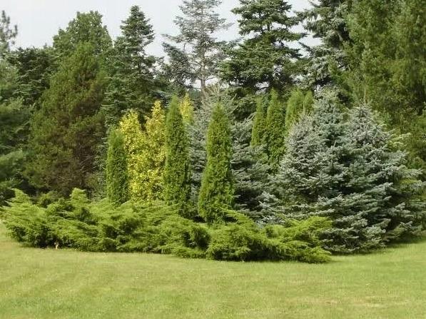 Nawóz do roślin iglastych Florovit 25 kg Forma granulat