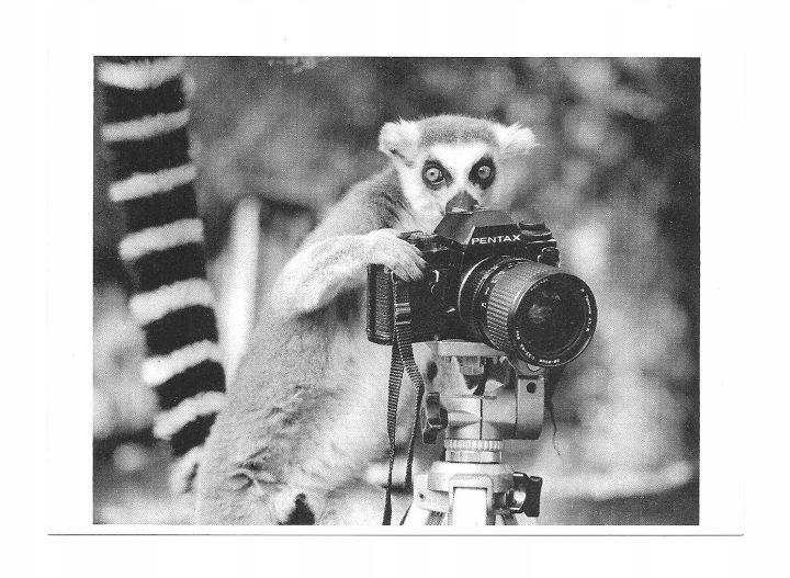 Pocztówka - Lemur z aparatem fotograficznym PENTAX