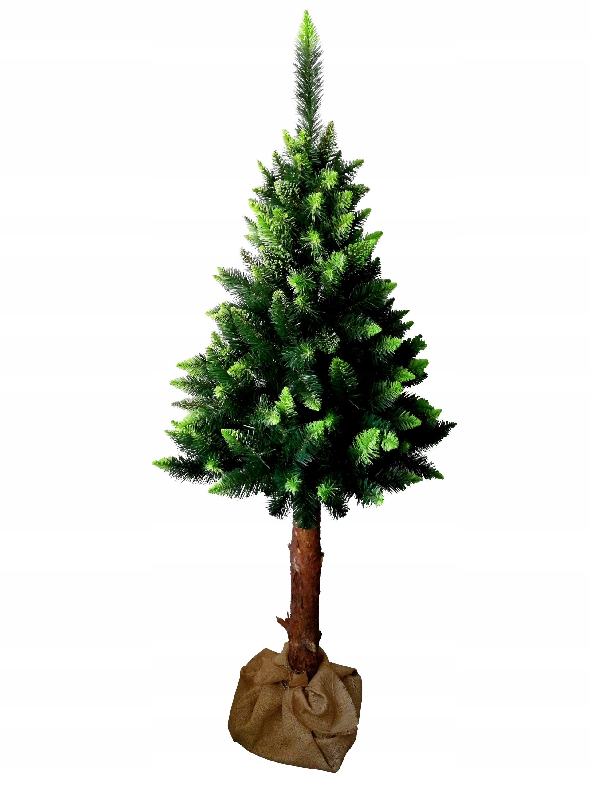 160 cm vianočný stromček BOROVICA NAŽIVO na pni borovice v juke
