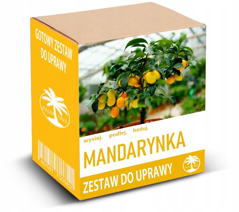 Набор для выращивания мандарина, миниатюрного деревца