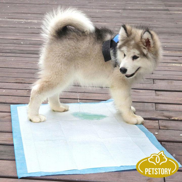 PODKŁADY MATY PSA PSÓW NAUKA SIKANIA 60x60 40 szt. Wielkość psa wszystkie rasy