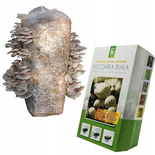 BOCZNIAK + PIECZARKA grzybnia balot 15kg boczniaki
