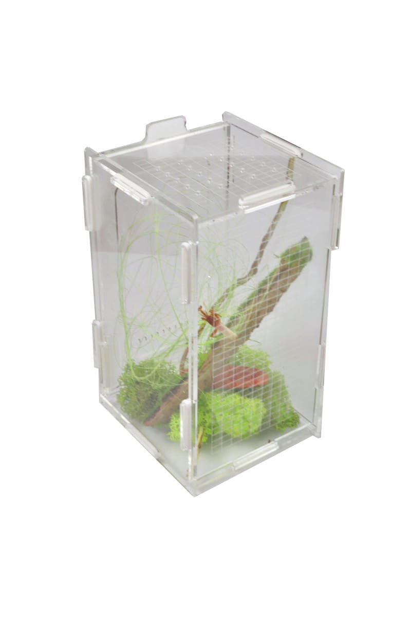 Modliszkarium 10x10x18 cm so zeleným machom