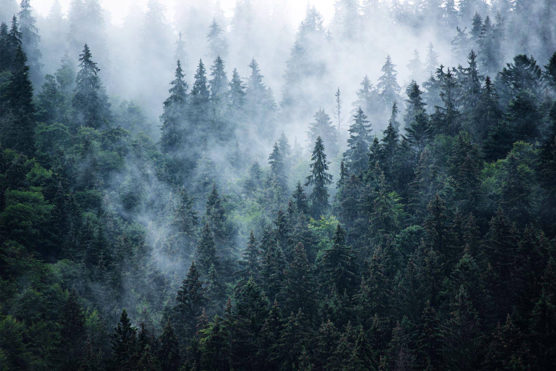 Fototapety fototapeta na ścianę ścienna las w mgle